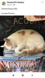gatto Venezia.jpg